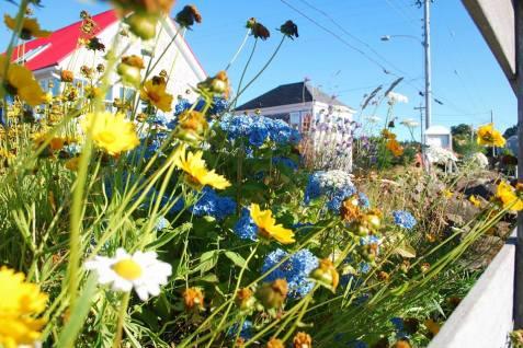 Brier Island Flowers
